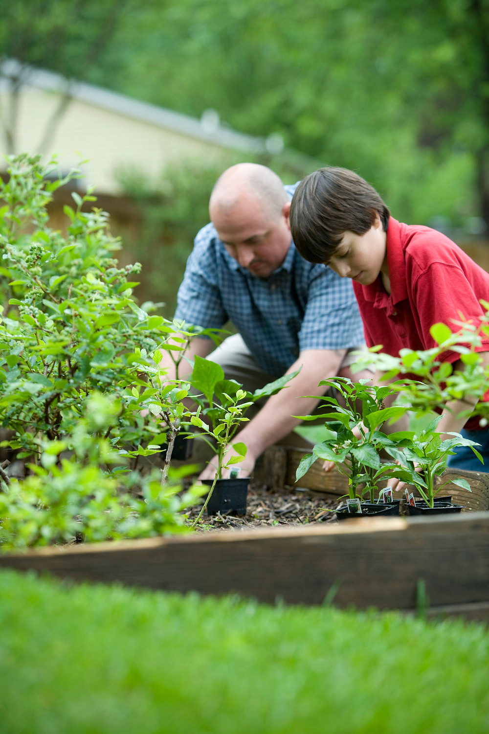 dad and son planting shrubs