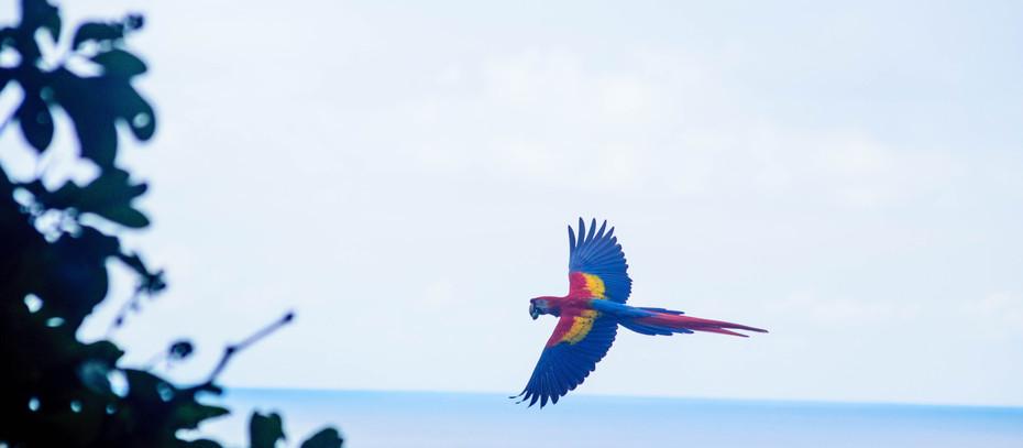 Öykü- Oya Özgür- Kuş Masalı