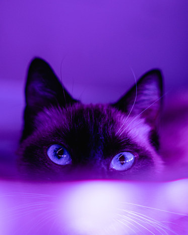 Purple-Cat-Eyes-Tabby-Nested-FengShui-ColorExploration