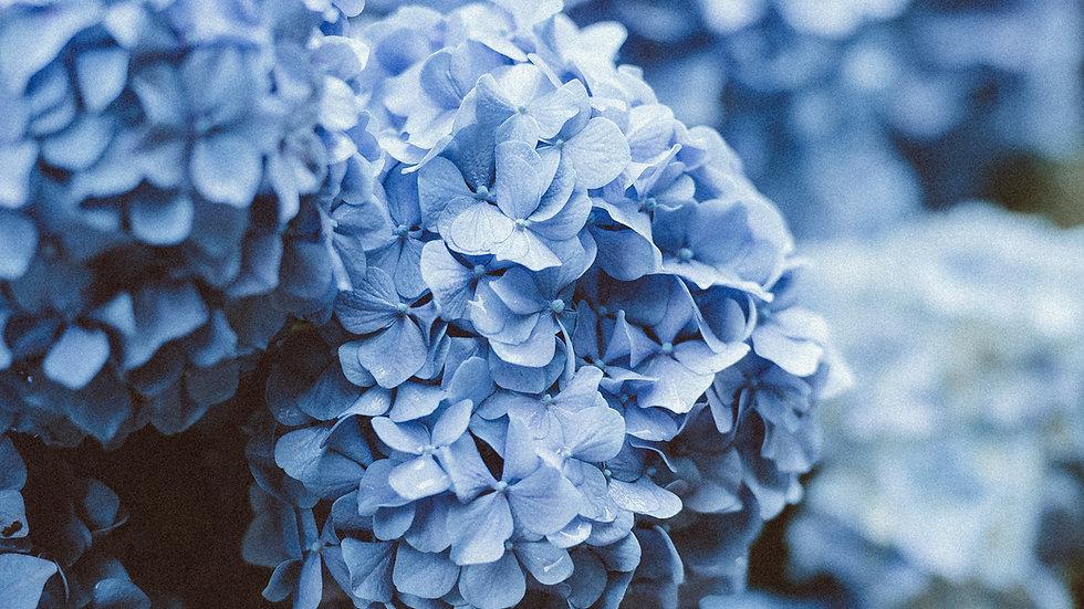 Blue Sky's Arrangement