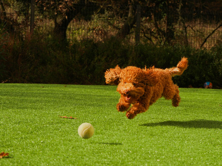 Workout with your pup at this new outdoor activity happening in Vancouver tomorrow