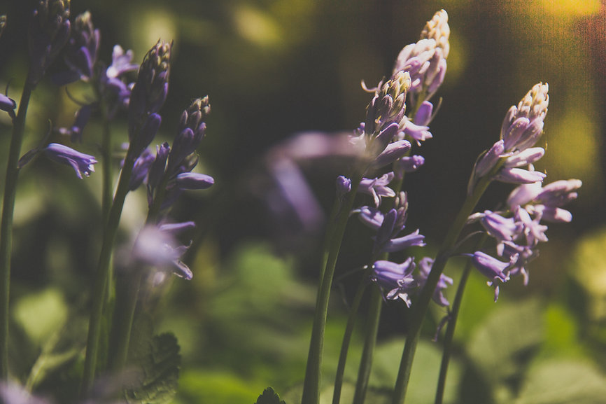 Modern Mystical | Space Cleansing | Melbourne | Sage Smudging, Selenite Wands, Palo Santo, Sage and Lavender