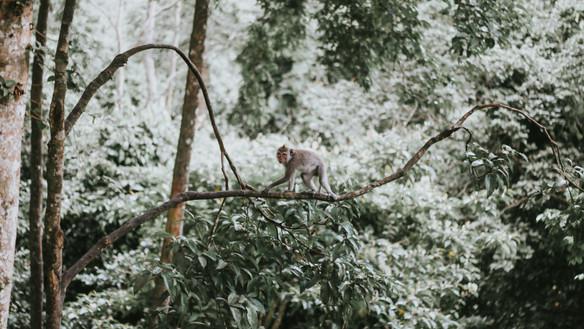 Pre meditation Scanning & the Monkey Mind