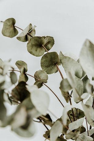 Image by Diana Polekhina