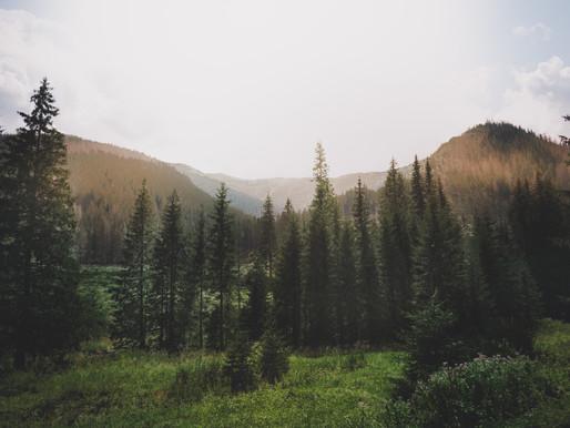 Perícia Ambiental e Florestal