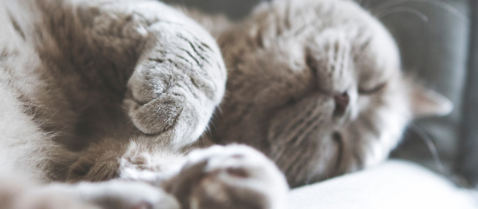 Is Napping Good For Adults?