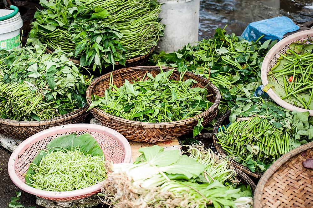 ayurvedic tradition | ayurvedic herbs