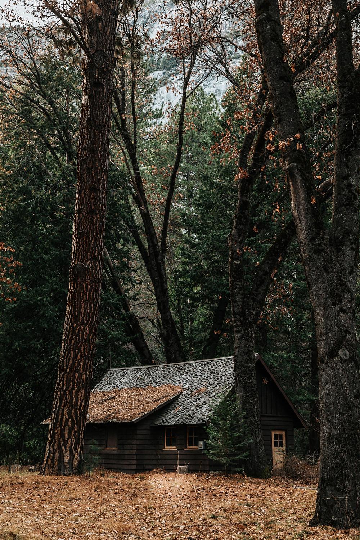 COVID-19 cabin fever