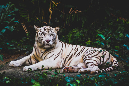 Image by Smit Patel