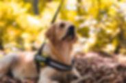 Denton TX Canine Good Citizen