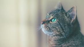 Kedilerde ve Köpeklerde COVID- 19