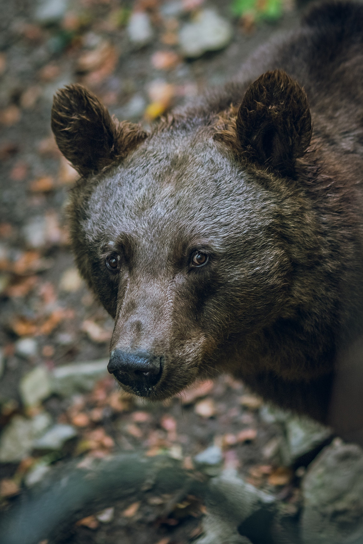 Enjoy viewing wildlife near your Leesburg rental
