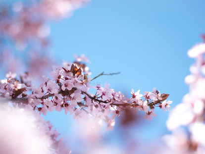 The Best Places to See Cherry Blossoms and Magnolia in London - Notting Hill