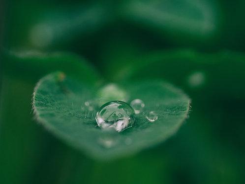 Gwragedd Annwn-Welsh Water Faery Empowerment - Health, Healing & Beauty