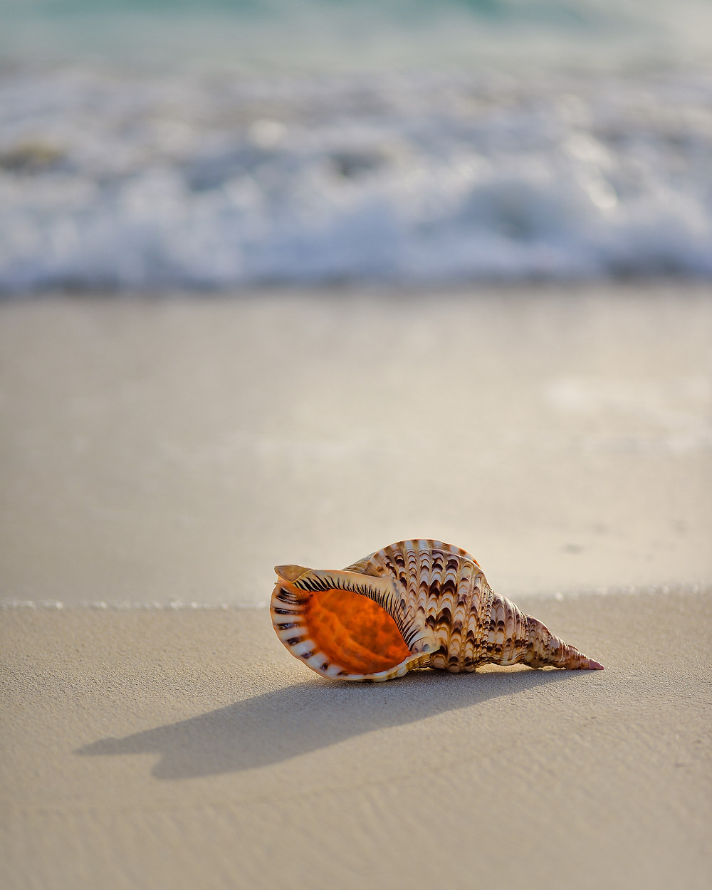 Live with awe and wonder like a child. Beach shells showcase the beauty around us.