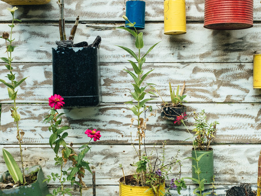 You don't need land to have a farm. Here's how to grow food in pots