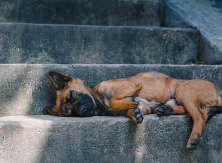 Epilepsija kod pasa - Evo što trebate znati
