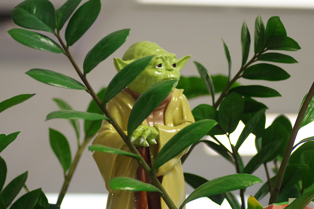 Yoda toy looking out through a plant