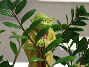 Mentoring: We all need a Yoda or three in our lives