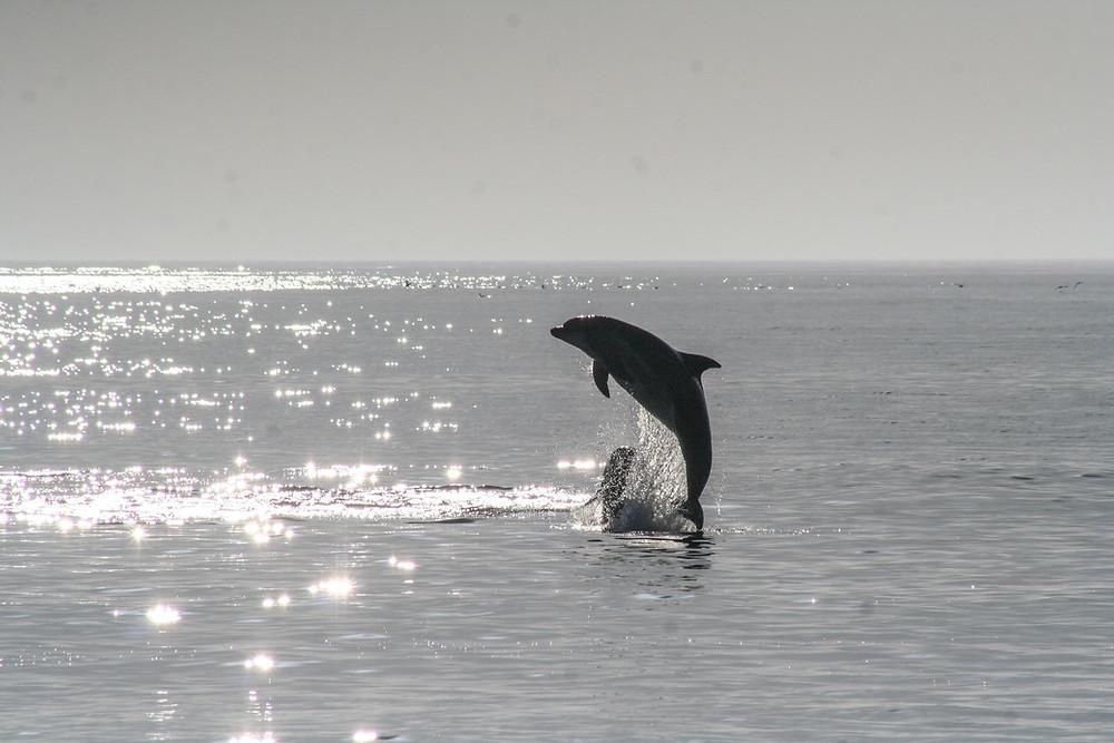 Дельфин, пелорус Дже, Блог о Новой Зеландии, туры в Новую Зеландию