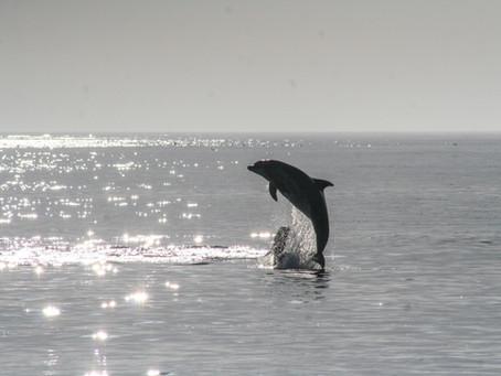 История одного дельфина