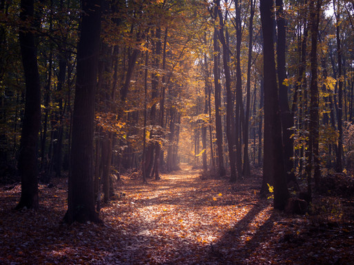 Velkommen inn i høsten. En tid for å ta vare på deg selv.