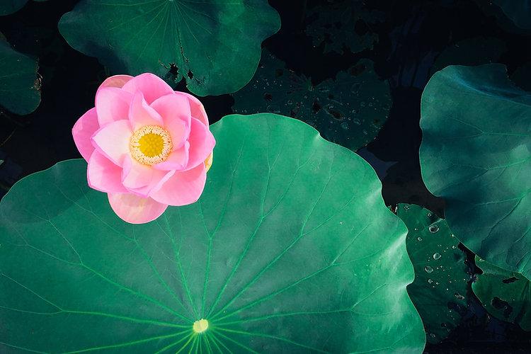 Image by Kumiko SHIMIZU