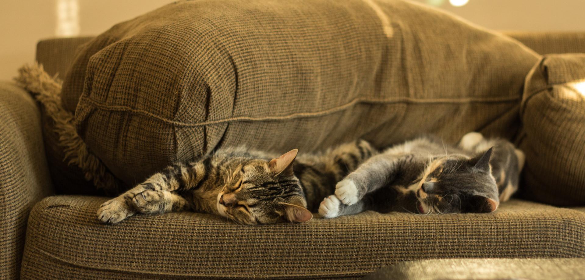 Сколько котиков можно оставить дома?