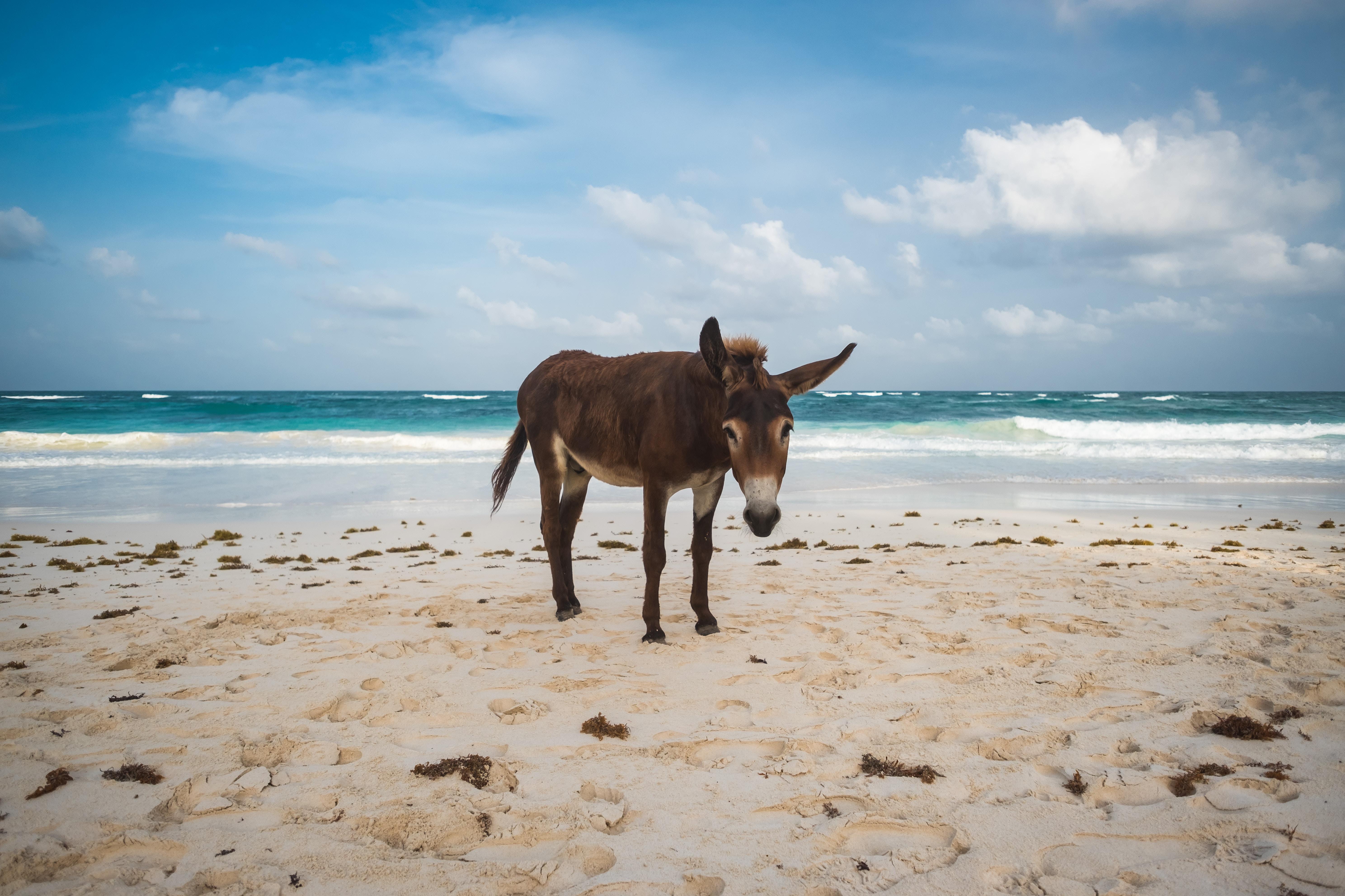 Chaung Tha Beach Myanmar