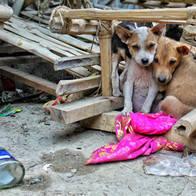 Duo Duo Project - Rescue dogs