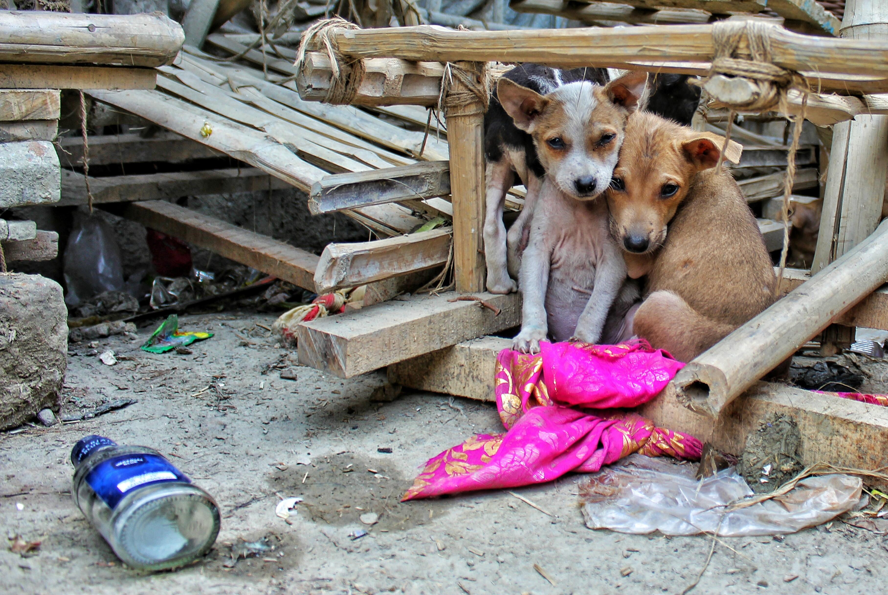 Rehabilitación en perros adoptados