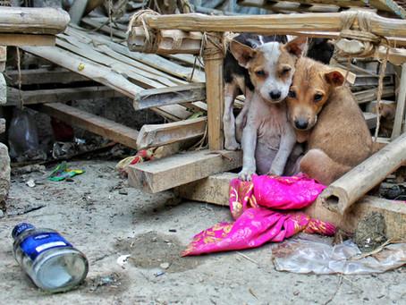 Lütfen Düşünceli Olun: İstanbul'da Sokak Hayvanlarının Durumu