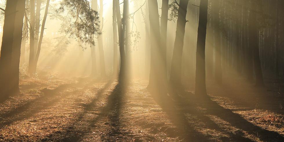 The Secret Language of Spirit with William Stillman Live via Zoom (1)
