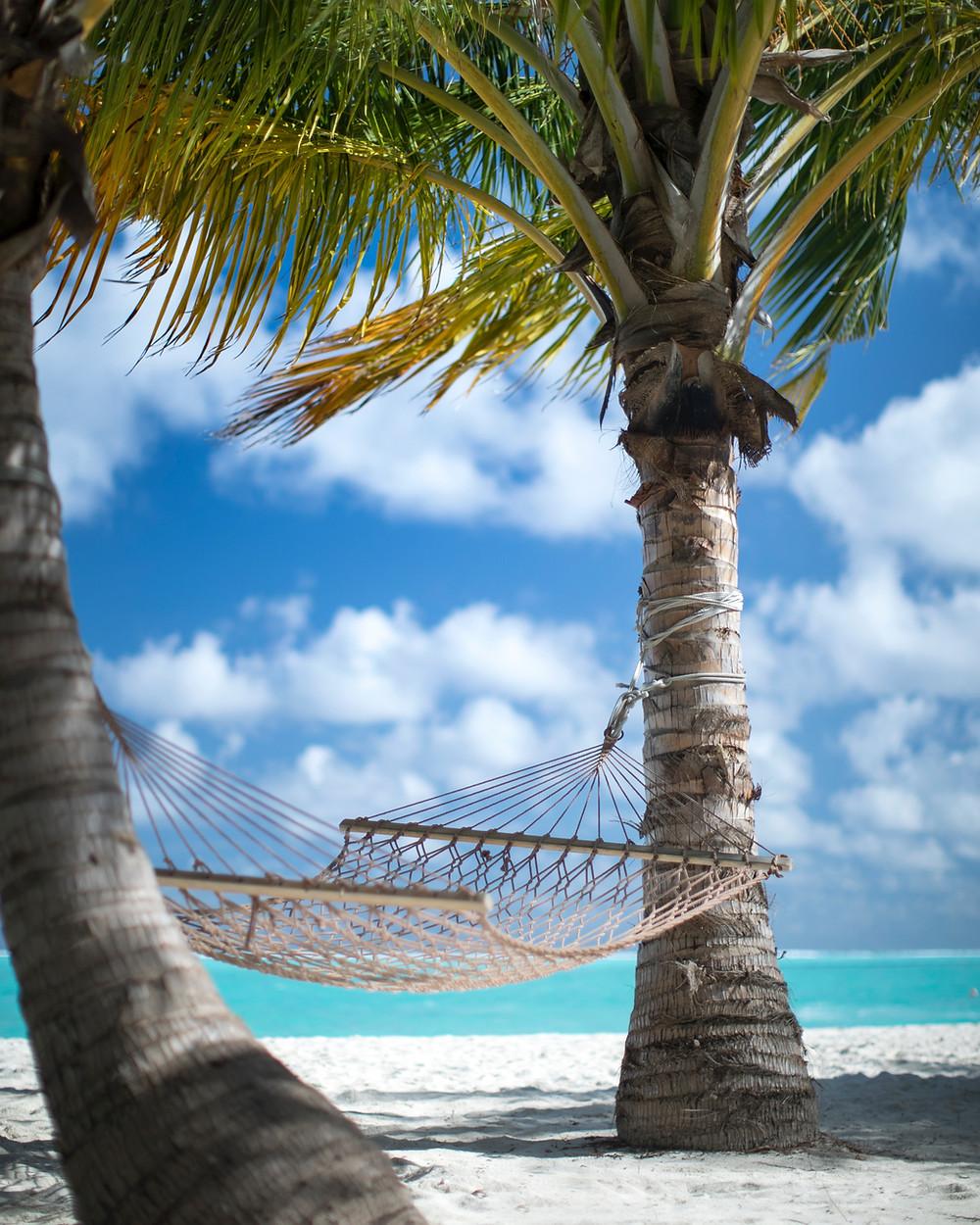 Isle tropicale avec palmiers et hamac