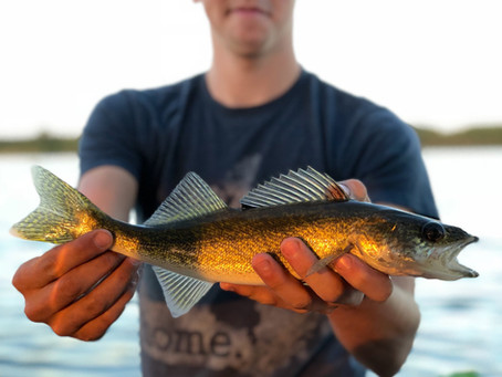 The Challenge and Mastery of Walleye Fishing Throughout The Seasons
