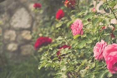 バラ剪定 庭園設計 日本花卉文化株式会社