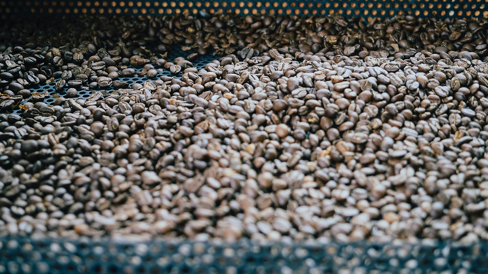 Organic Brazil Natural Green Beans