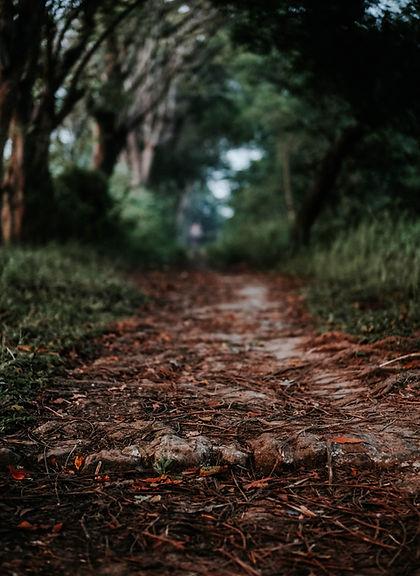 Image by Indra Giri