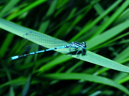 My Spiritual and Artistic Connection with The Dragonfly