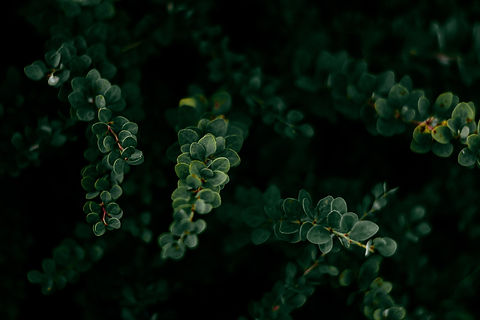Image by Irina Iriser