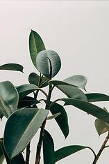 Foto van planten wat een rustige maar bloeiende omgeving laat zien.