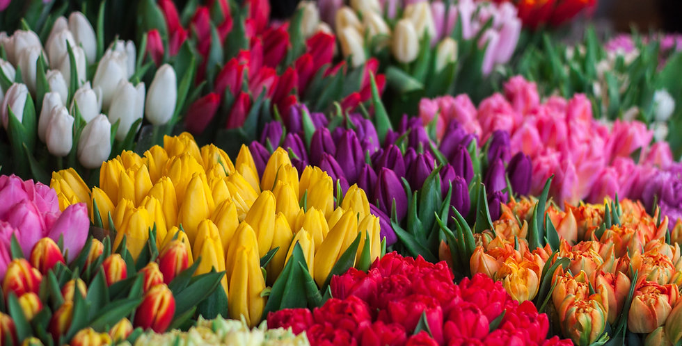 Spring Flower Subscription Community Supported Agriculture (CSA)