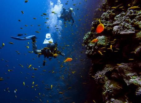 Why You Should Scuba Dive