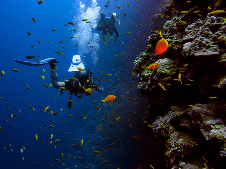 Why You Should Scuba Dive