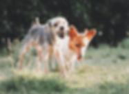 Social dog walk enrichment service