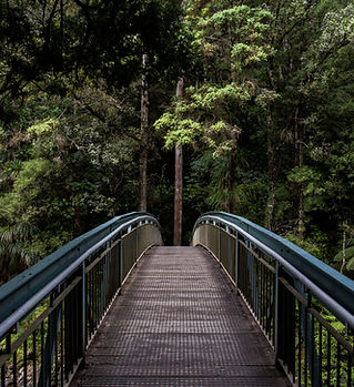 Bridge in Forest Green Travel