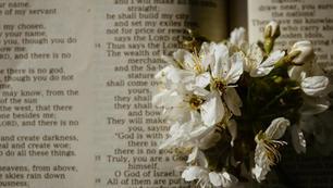 Want to grow in your faith?