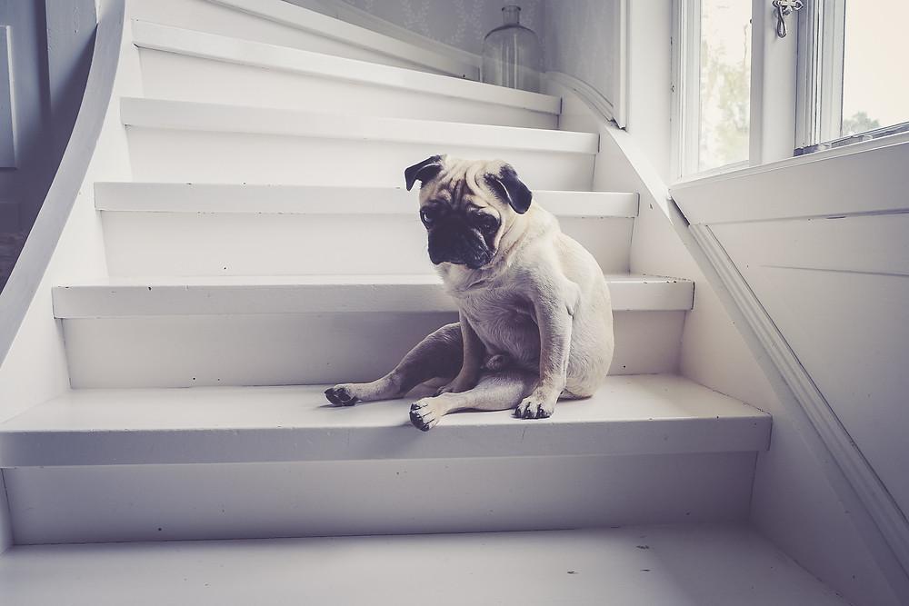 anxiety in dogs | Santee, San Diego | Cuyamaca Animal Hospital | Santee Veterinarian