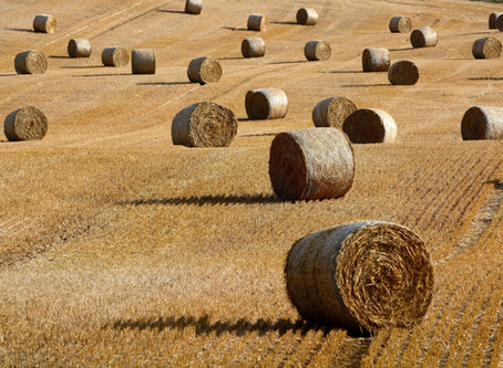 BUILDING WITH STRAW #2: CHARACTERISTICS AND ADVANTAGES OF STRAW