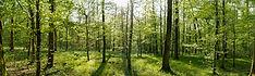 Agroforestry plot | Rize ag